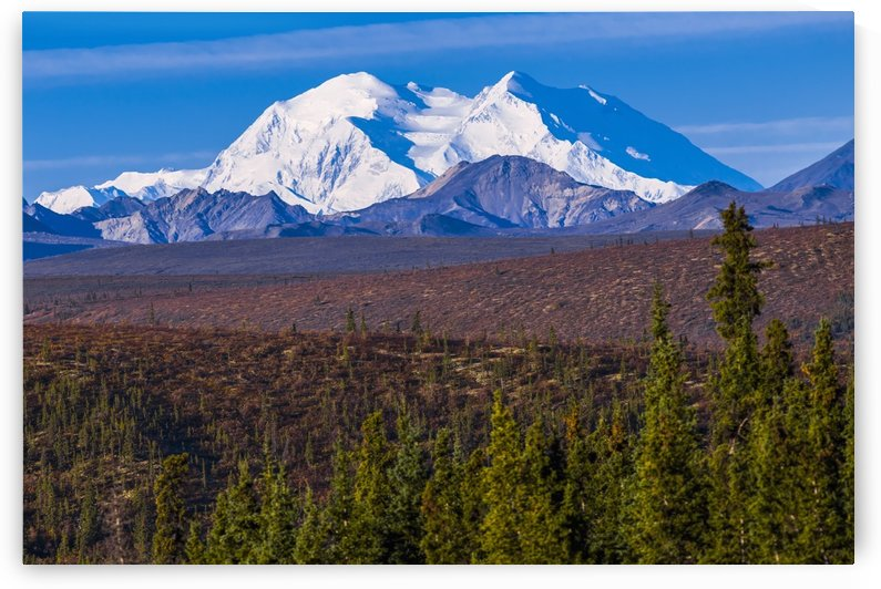 View of Denali from the portion of the park road open to the public in Denali National Park; Alaska, United States of America by PacificStock