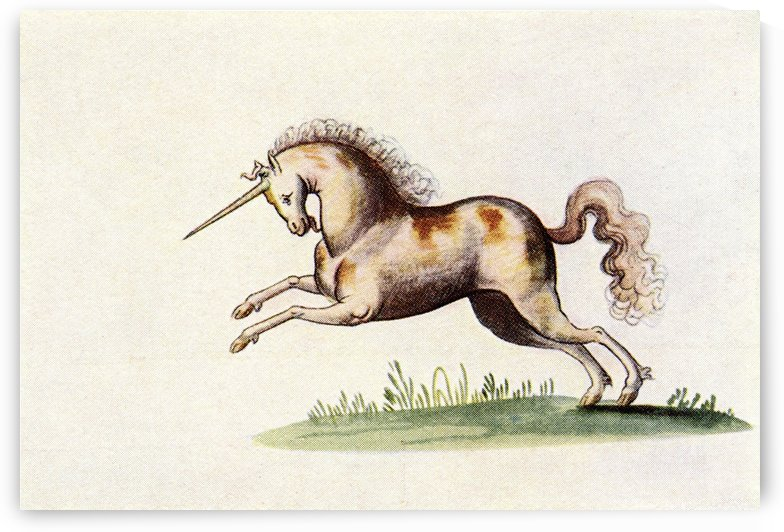 The Unicorn.  After an illustration from The Livre d'Amis of Marguerite de Valois in The Illustrated London News, Christmas Number, 1933. by PacificStock