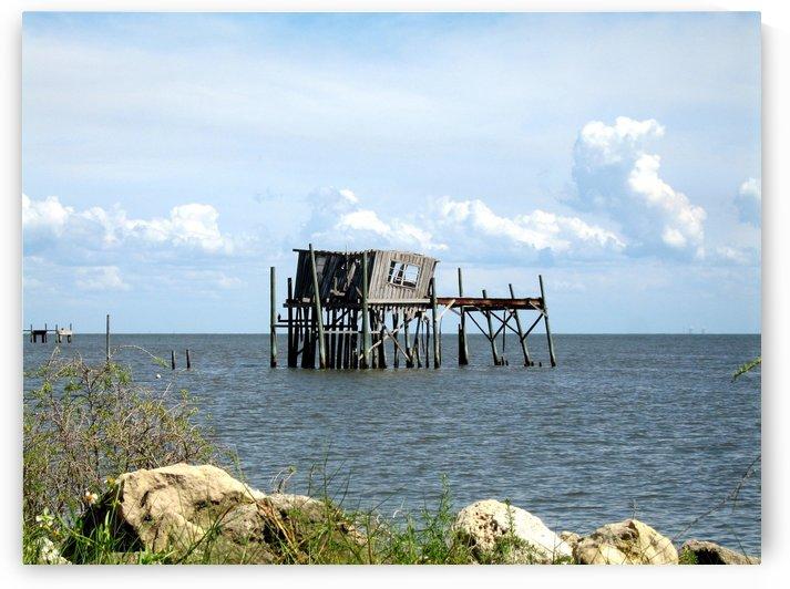 Photo image of Cedar Key Honeymoon Shack in Florida by PJ Lalli