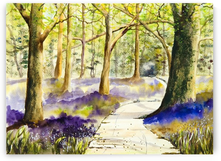 Bluebell Grove  by DHWebbArt