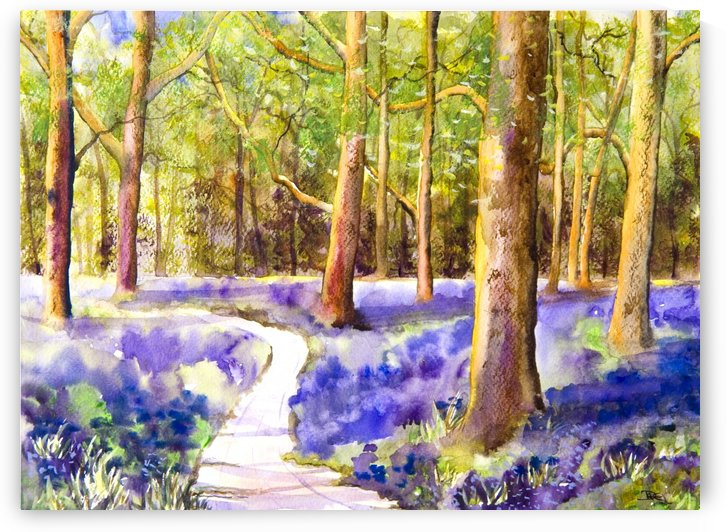 Bluebell Wood  by DHWebbArt