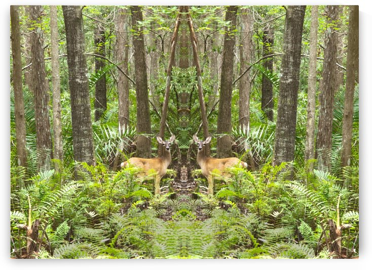 mirrored HDR Deer in the forest by PJ Lalli