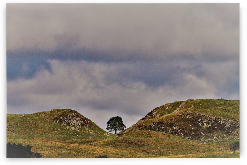 Hadrian's wall tree by Andy Jamieson