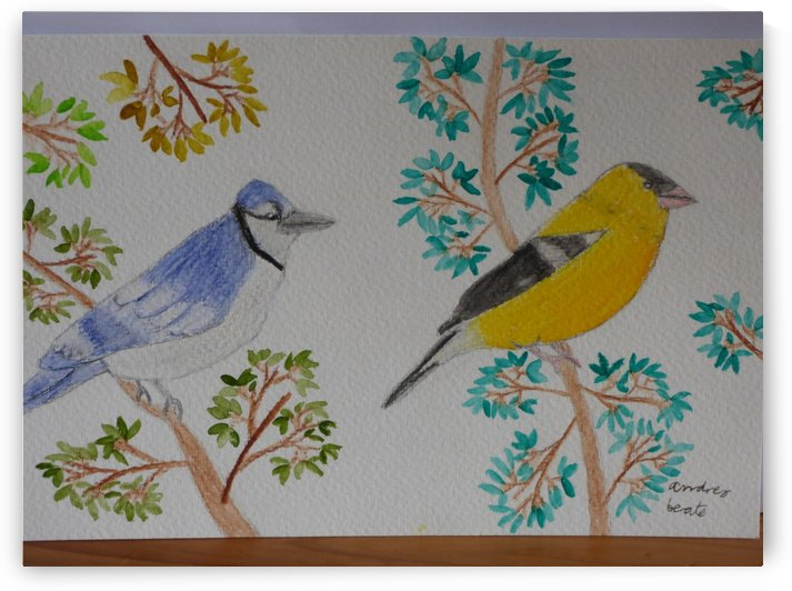 Blue Jay and Goldfinch  by Andres Beate