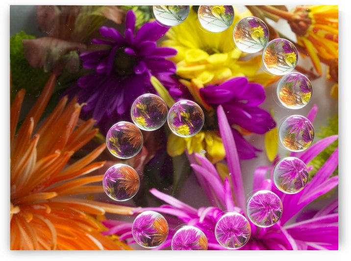 FLOWERS REFRACTION 14 by PJ Lalli