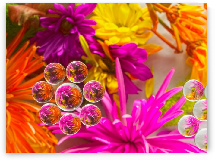 FLOWERS REFRACTION 10 by PJ Lalli