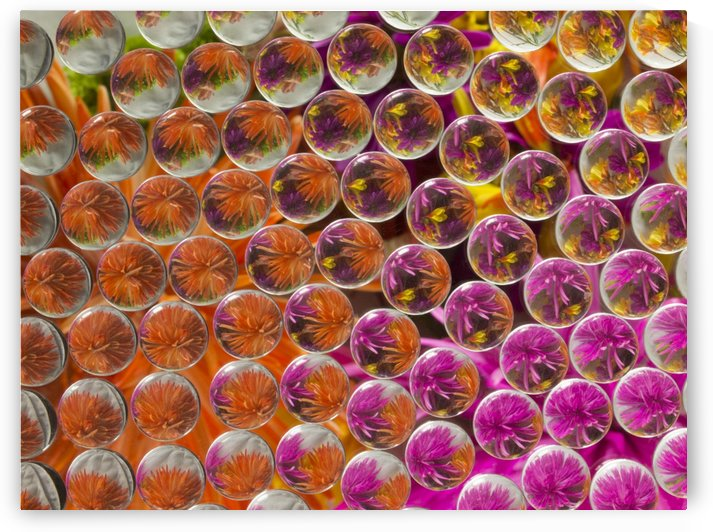 FLOWERS REFRACTION 4 by PJ Lalli