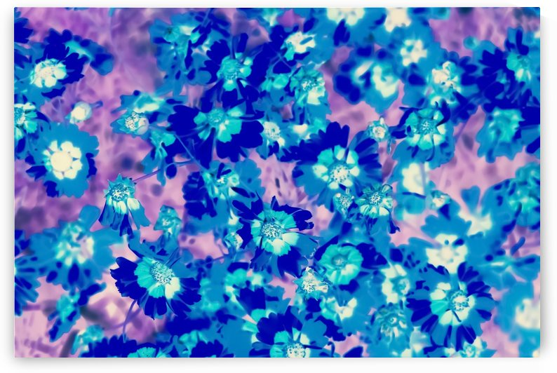 blooming blue flower abstract with pink background by TimmyLA