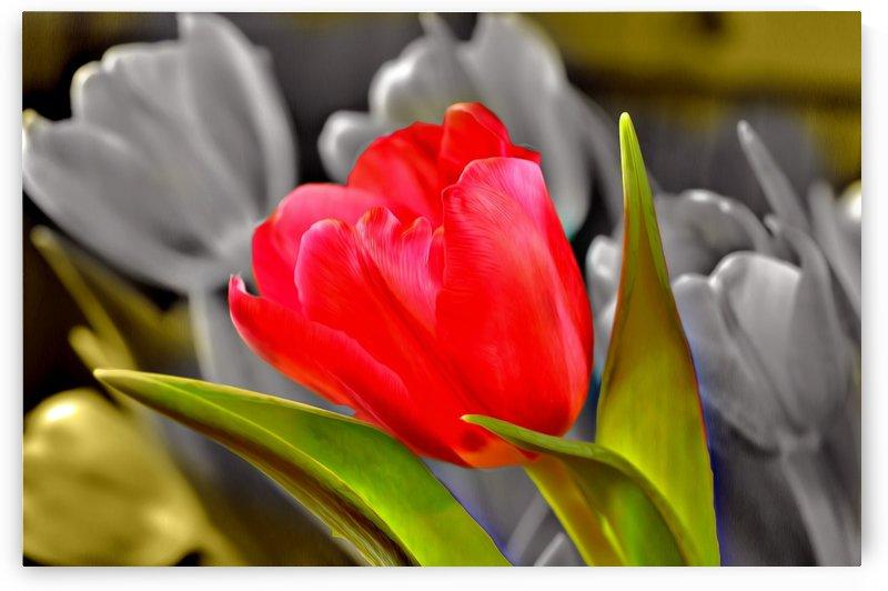 tulip4U by Chazzi R  Davis