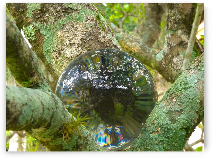 HDR Crystal ball in branches with lychen by PJ Lalli
