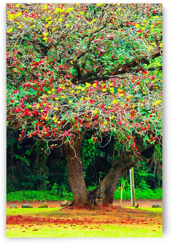 big tree with green yellow and red leaves by TimmyLA