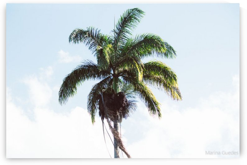 Coconut tree by Marina Guedes