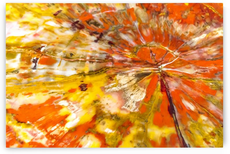 Petrified Wood Abstract  by Melody Rossi