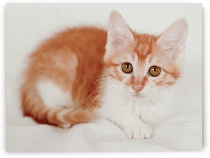 Kitty cat 1 by MENG LU