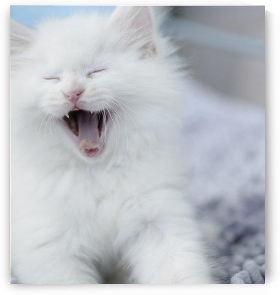 laughing cat by MENG LU