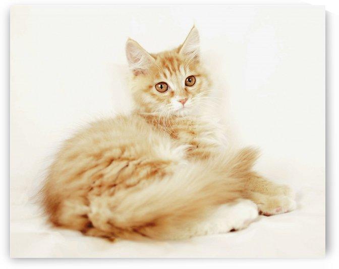 cat lady 2 by MENG LU