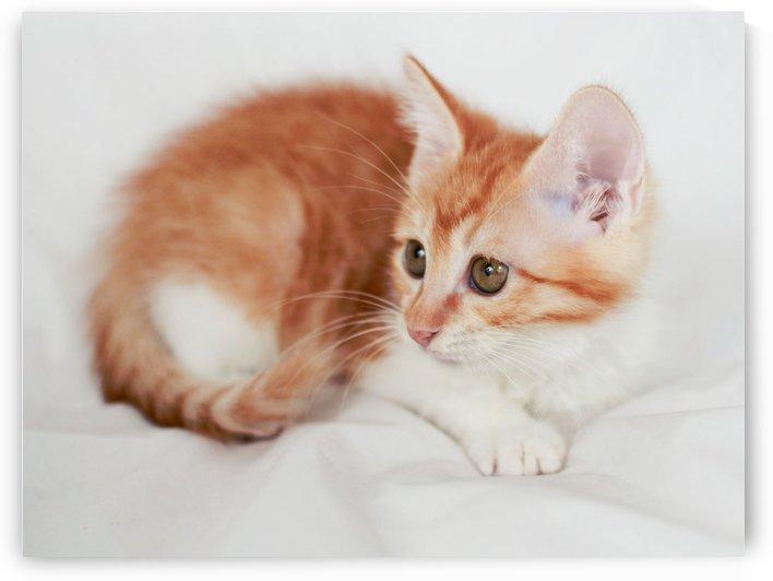 lovely kitty by MENG LU
