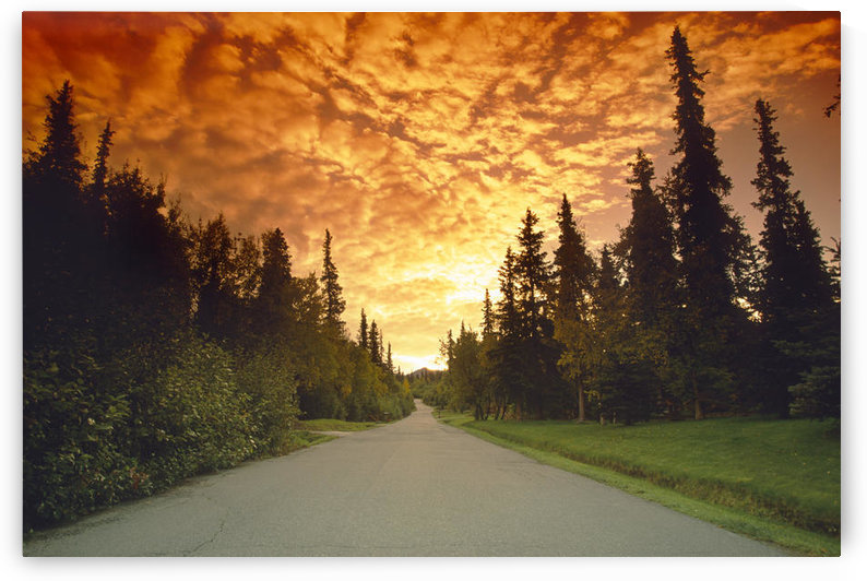Road Going Into Sunset Rural Anchorage Sc Ak Summer by PacificStock