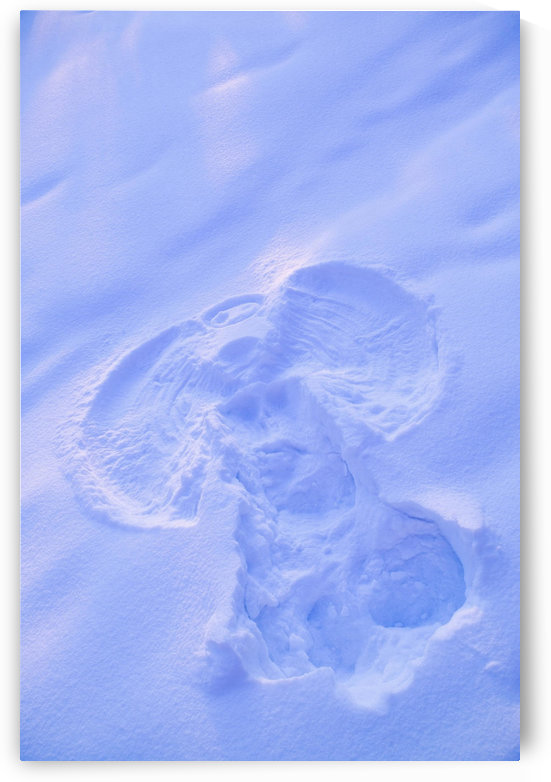 Close Up Of Snow Angel At Sunset With Blue And Pink Highlights Winter Fairbanks Interior Alaska by PacificStock