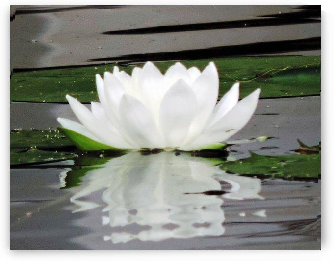 FloweringLilyPad by Cheryl Barker