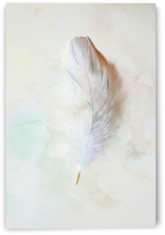 Abstract Feather by Richard D. Jungst