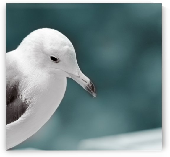 Gull in thinking by MENG LU