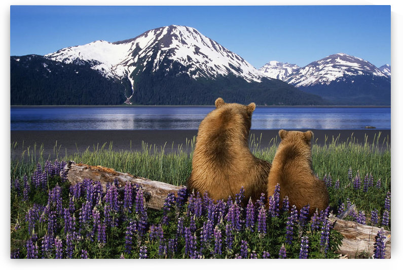 Grizzly Sow & Cub Sit On Log & View Turnagain Arm Southcentral Alaska Digital Composite by PacificStock