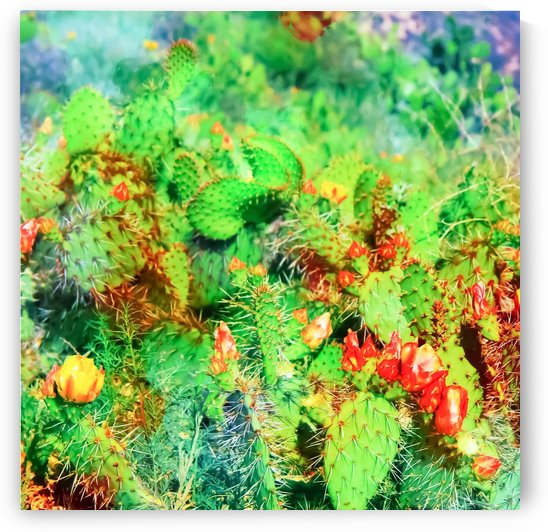 green cactus with yellow and red flower in the desert by TimmyLA
