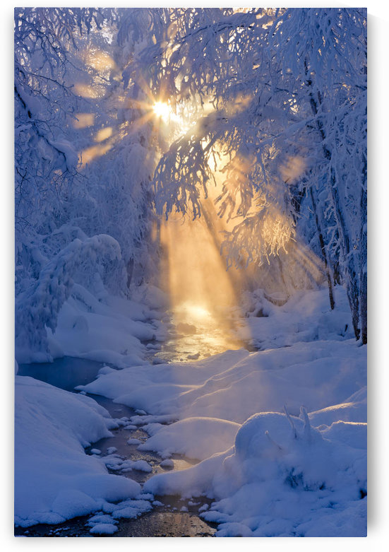 Small Stream In A Hoarfrost Covered Forest With Rays Of Sun Filtering Through The Fog In The Background, Russian Jack Springs Park, Anchorage, Southcentral Alaska. Digitally Enhanced. by PacificStock