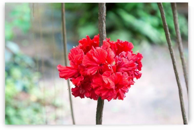 red blossom in a garden restaurant in chainat by Babetts Bildergalerie