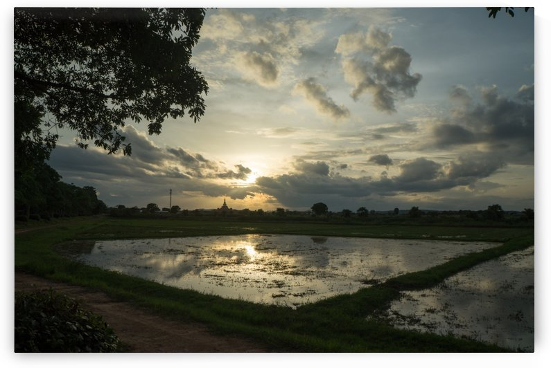 rice field in Sukhothai in thailand in sunset by Babetts Bildergalerie