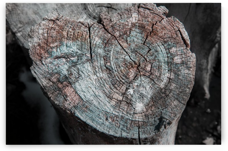 Rustic Log by Alek MacRae
