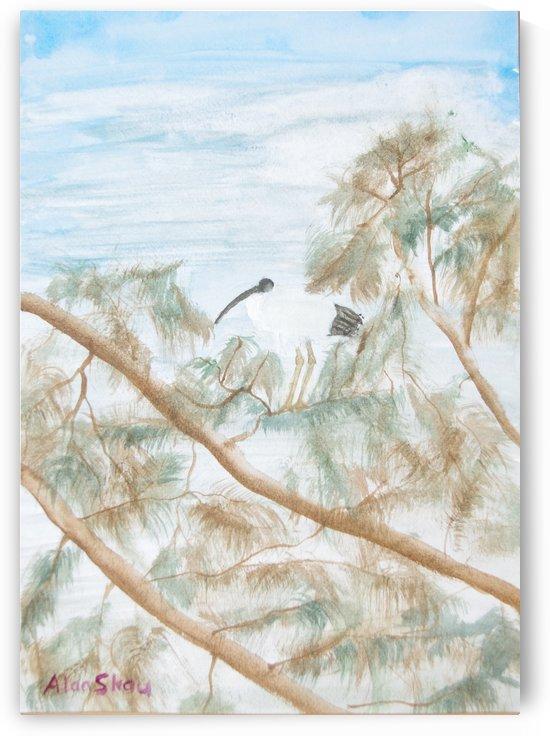 Ibis in a tree. by Alan Skau