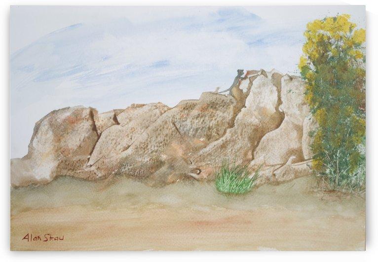Animal on the rocks. by Alan Skau