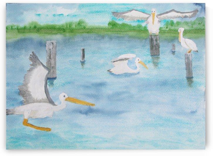 Pelicans in a coastal inlet. by Alan Skau