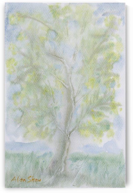 Tree. by Alan Skau