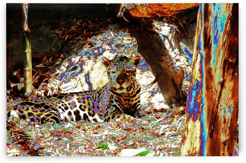 Leopard resting. by Alan Skau