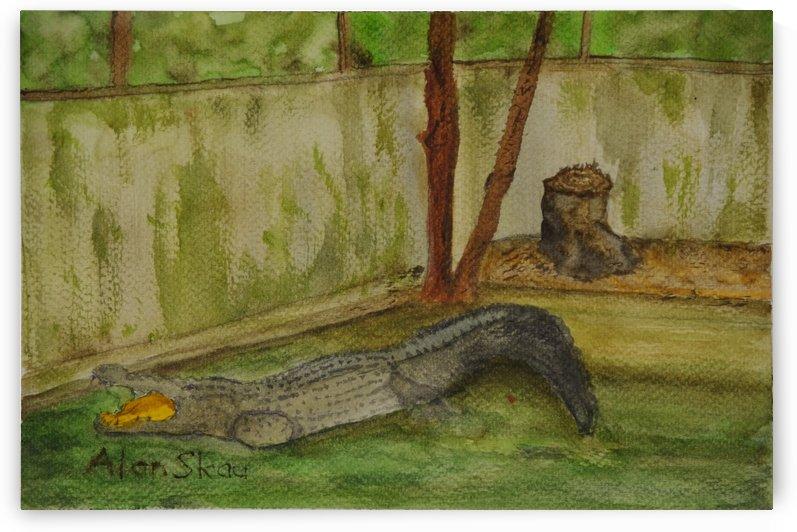 Crocodile. by Alan Skau