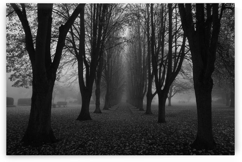 Dark path by Andy Jamieson