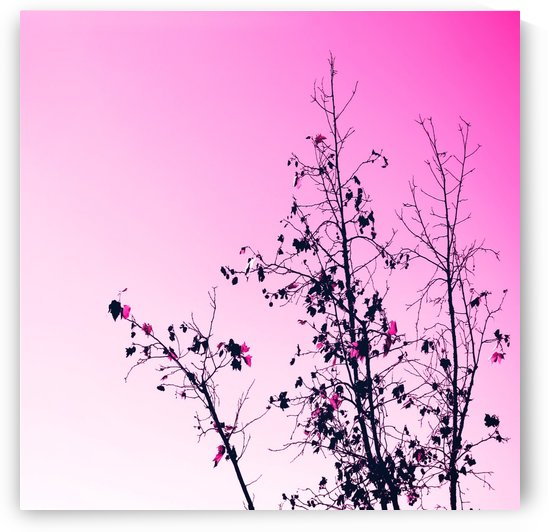 isolate tree branch abstract with leaf and pink background by TimmyLA