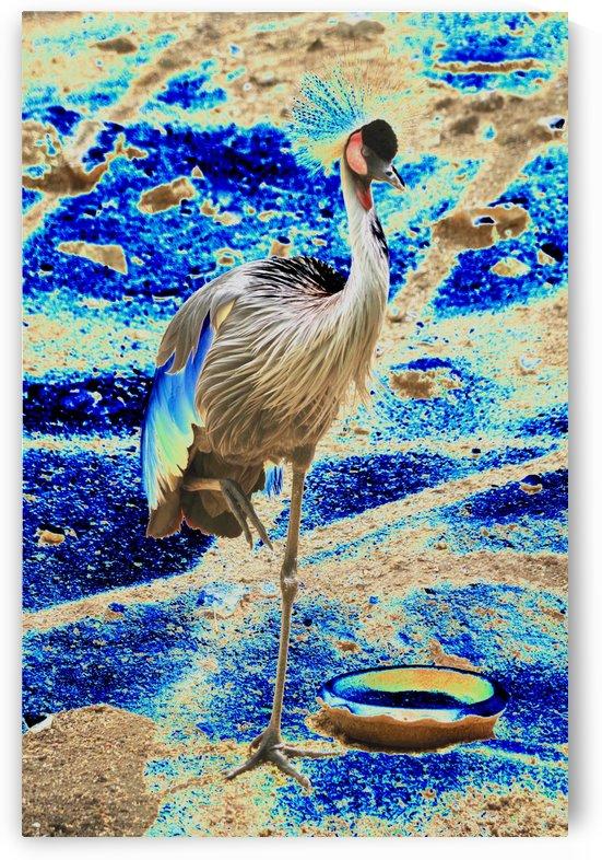 Long leg exotic bird. by Alan Skau