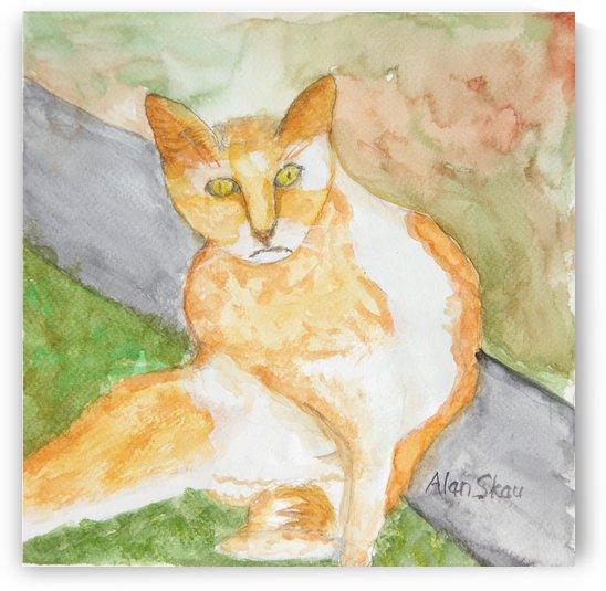 Ginger & White Cat. by Alan Skau