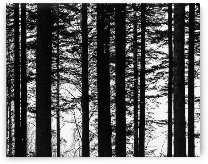 Trees II by Marcin Lukaszewicz
