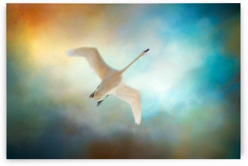 Swan Wings by Michel Soucy