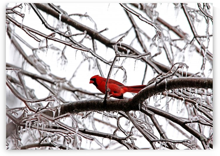 Icy Perch by Deb Oppermann