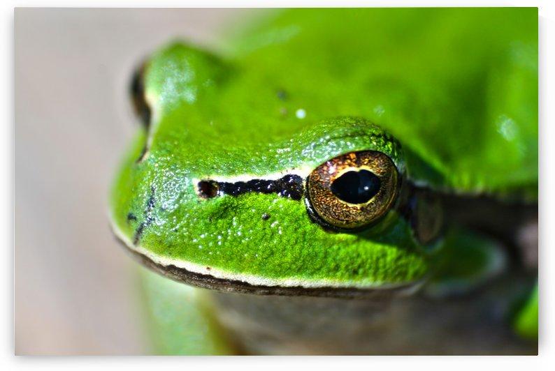 Frog eyes lake green by Stockpix