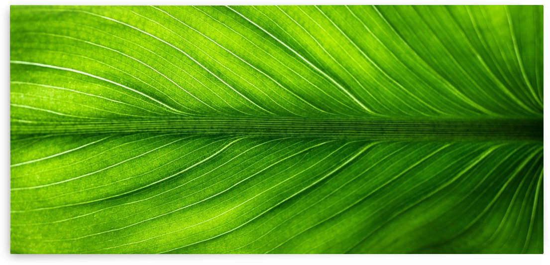 leaf by Stock Photography