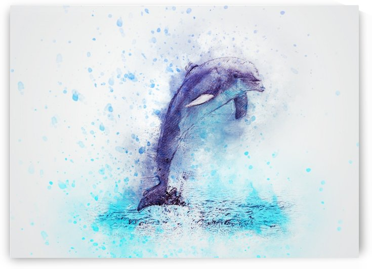 dolphin by Stock Photography