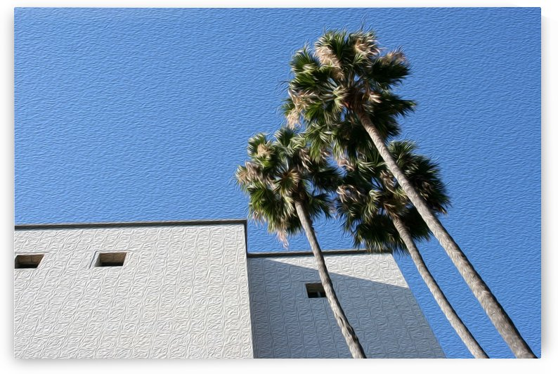 3 Palm Trees Next to Building by Hold Still Photography