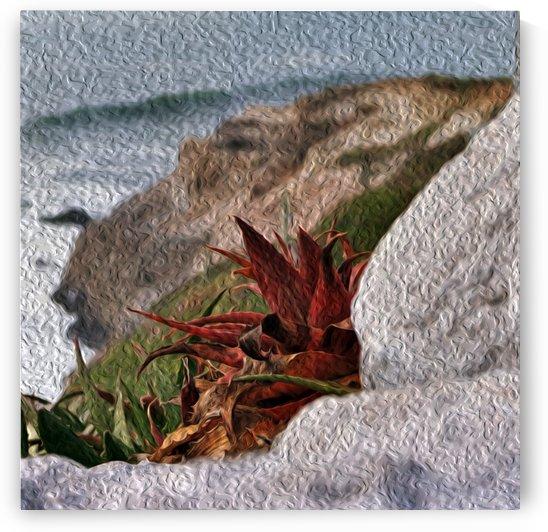 Coastal Red Aloe Vera  by Hold Still Photography
